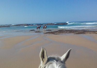 beach-rocks-horses-1