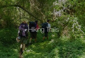 hiking-alexandria-forest