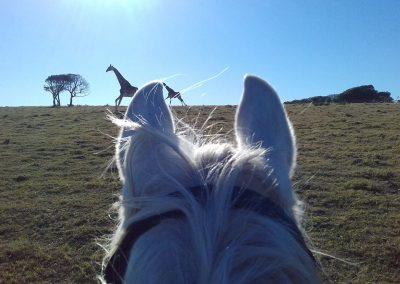 horse-with-giraffe-1
