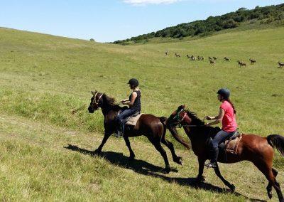 wildlife-on-horseback1