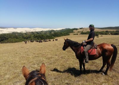 wildlife-on-horseback2